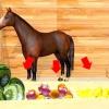 Comment trouver légumes sains et de fruits pour les chevaux