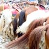 Comment trouver votre cheval de rêve