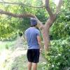 Comment libérer grimper à un arbre