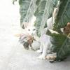 Comment obtenir un chat à nourrir une étrange chaton