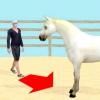 Comment obtenir un cheval timide de la tête à vous faire confiance