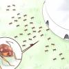 Comment se débarrasser des fourmis à l'extérieur