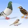 Comment se débarrasser des oiseaux