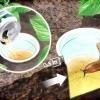 Comment se débarrasser des limaces de jardin