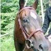 Comment tirer le meilleur parti de votre cheval