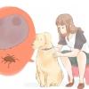 Comment obtenir met hors de chiens