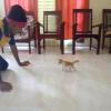 Comment obtenir votre chat à vous