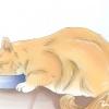 Comment obtenir votre chat de dormir avec vous