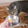 Comment obtenir votre chat à dire le temps