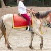 Comment obtenir votre cheval à respecter votre espace