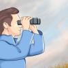 Comment aller regarder hibou