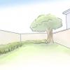 Comment faire pousser un arbre de magnolia
