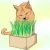 Comment faire pousser un jardin animaux de compagnie