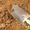 Comment faire pousser un rosier rose de boutures de brousse