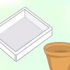Comment faire pousser des annuelles dans la mousse de sphaigne