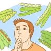 Comment faire pousser des fèves