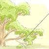 Comment faire pousser des boutures de branches de plantes qui ont déjà racines