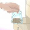 Comment faire pousser cornouiller