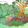 Comment faire pousser des plantes de jardin