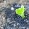 Comment faire pousser des jardins d'herbes issues de semences