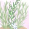 Comment cultiver des herbes de boutures