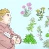 Comment cultiver des herbes à l'intérieur sous un éclairage