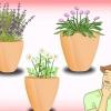 Comment faire pousser des plantes vivaces à partir de graines
