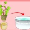 Comment faire pousser des groseilles