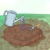 Comment faire pousser les pivoines arbustives
