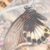 Comment gérer correctement papillons