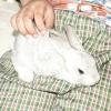 Comment gérer les lapins