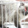 Comment faire pour avoir une visite réussie chez le vétérinaire