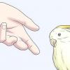 Comment faire pour avoir oiseaux sauvages destination de votre main
