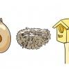 Comment aider un bébé oiseau qui est tombé sur un nid