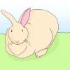 Comment aider un lapin en surpoids à perdre du poids