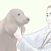Comment aider votre chien à vivre plus longtemps