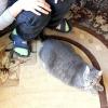 Comment tenir un chat