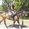 Comment monter à cheval comme un pro