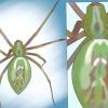 Comment identifier les araignées par région