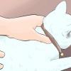 Comment introduire un nouveau chat à d'autres chats