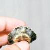 Comment garder une tortue en bonne santé