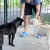Comment maintenir la paix entre les chiens