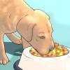 Comment tenir les animaux en sécurité pendant les vacances