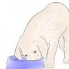 Comment garder les animaux domestiques à l'abri des crapauds de canne