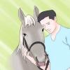 Comment vous et votre cheval garder en sécurité sous la pluie