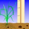 Comment tuer les mauvaises herbes