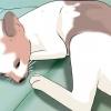 Comment savoir si un chat est un parasite