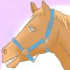Comment mener un cheval