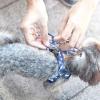 Comment former votre chien en laisse