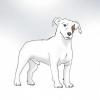Comment vivre avec un jack russell terrier hyper